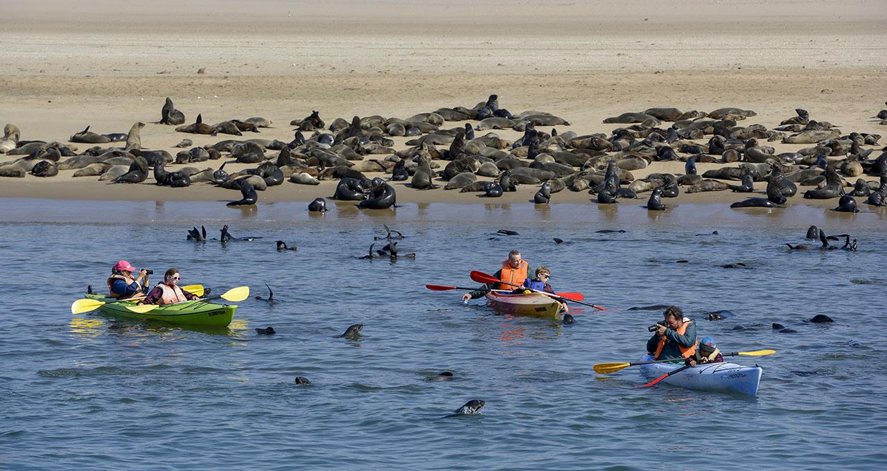 Namibie, touristes en kayak de mer parmi les otaries à fourire dans la baie de Walvis Bay.