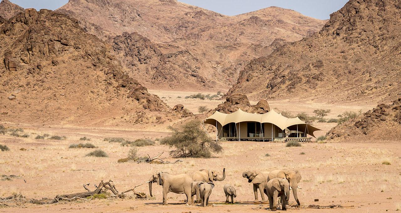 Namibie, Kaokoland, depuis la rivière Hoanib, vue panoramique sur le lodge de charme Hoanib Skeleton Coast Camp, un groupe d'éléphant en premier plan