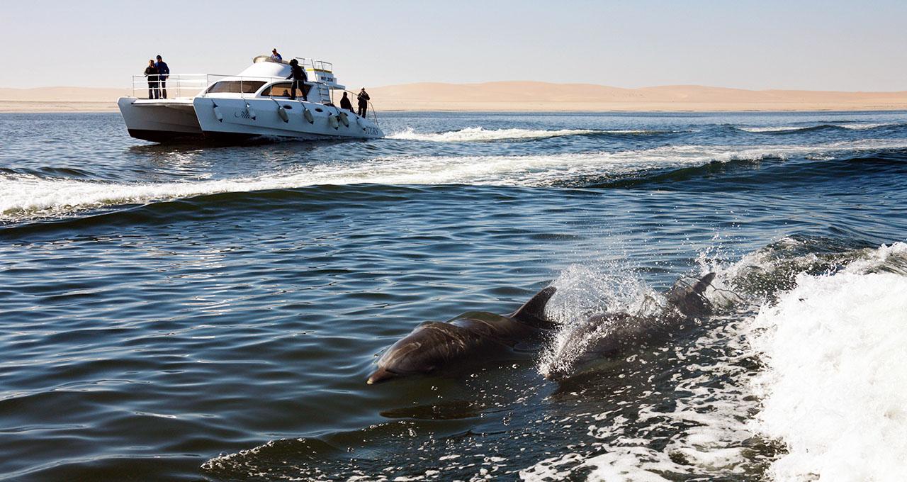 Namibie, Walvis Bay : une famille accompagne en bateau deux dauphins Tursiops dans la baie.