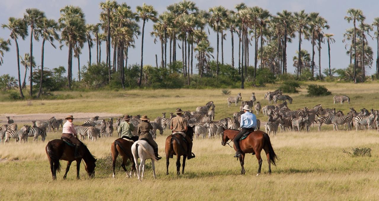 Botswana, Kalahari, groupe équestre observant un groupe important de zèbres