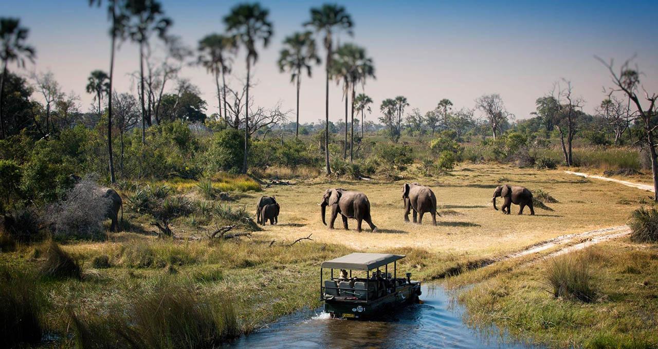 Botswana, rencontre d'un groupe d'éléphants durant une excursion safari en 4x4 dans le delta de l'Okavango