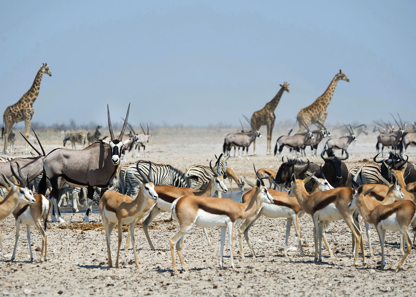 Namibie, parc national d'Etosha